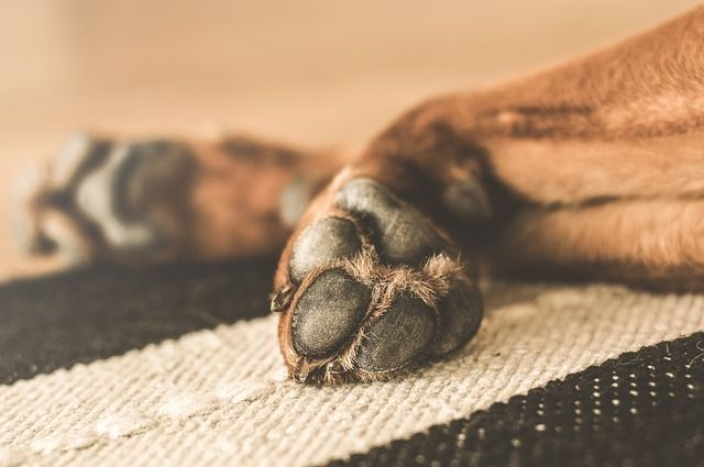 Тюменцы обеспокоены: неизвестные отстреливают бездомных собак