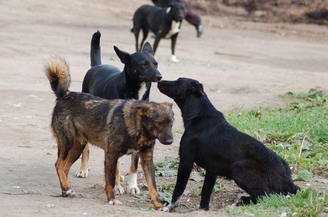 ВУдмуртии отловом и содержанием бездомных животных занимаются муниципалитеты.