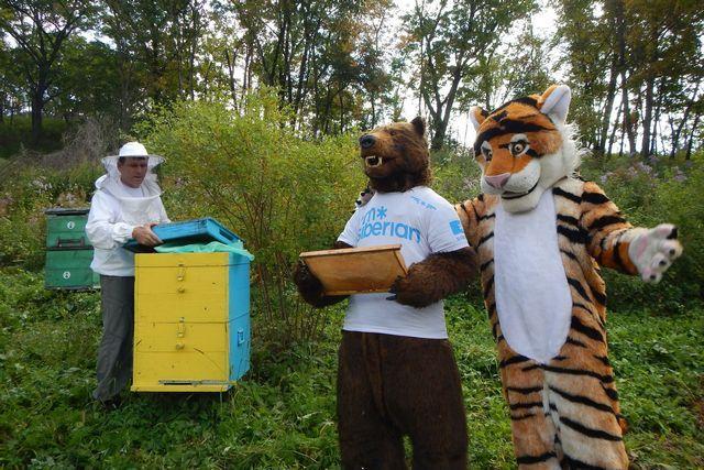 И сибирский медведь с амурским тигром мёда попробовали.