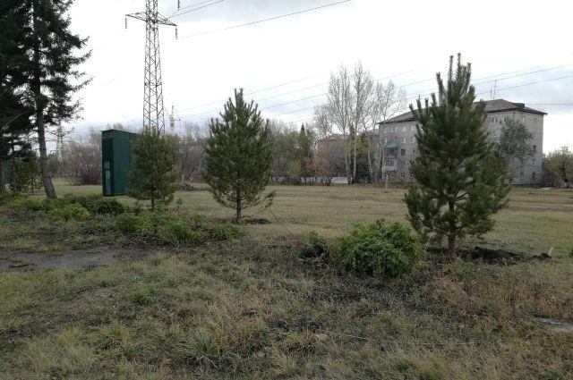 Молодые хвойные деревца появились на аллее ветеранов проспекта Космонавтов.
