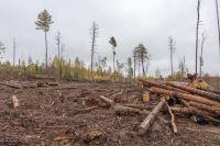 За рубку леса в Тюменской области возбуждено почти 200 уголовных дел