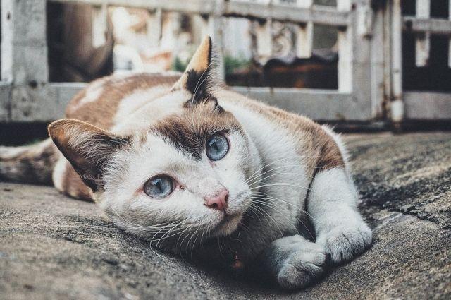 Коту нужна серьезная операция.