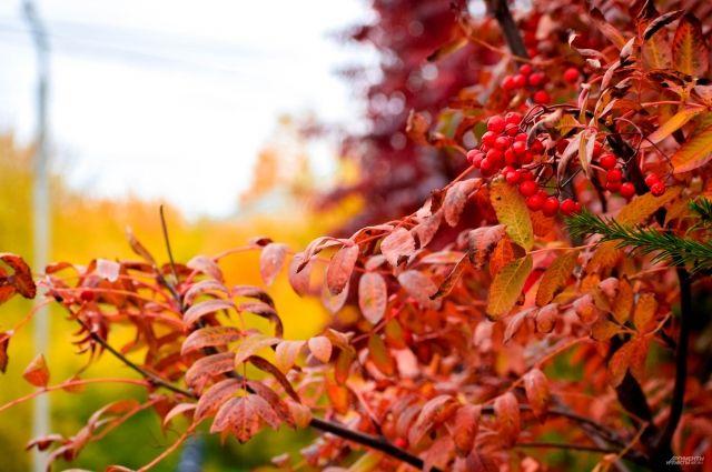 Последние выходные октября будут теплыми.