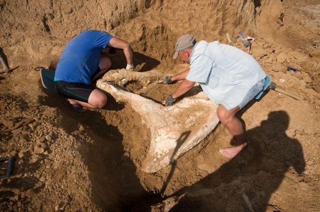 В Ростовской области находят много останков животных, живших на просторах Приазовья на протяжении последних 12 миллионов лет