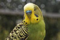 До сих пор не было известно ни об одном попугае, который читает молитвы.