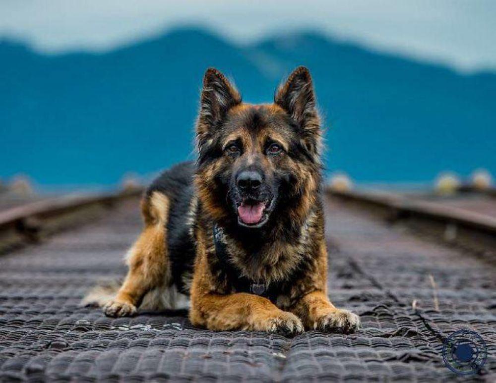 Эй, приятель, печеньки не будет? - фотографы, которые работают для календаря без гонорара, говорят, что собаки ведут себя на съемках очень послушно.