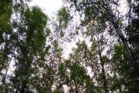 Пожилой человек 23 октября ушёл в лес в микрорайоне Верхняя Курья