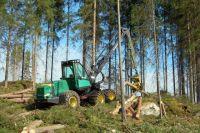Собственник участка решил вырубить 80-летние деревья.