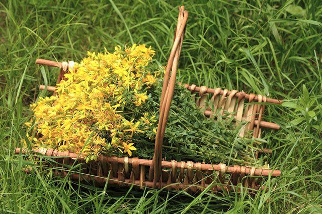 5 секретов от травников. Как собирать, обрабатывать и хранить растения