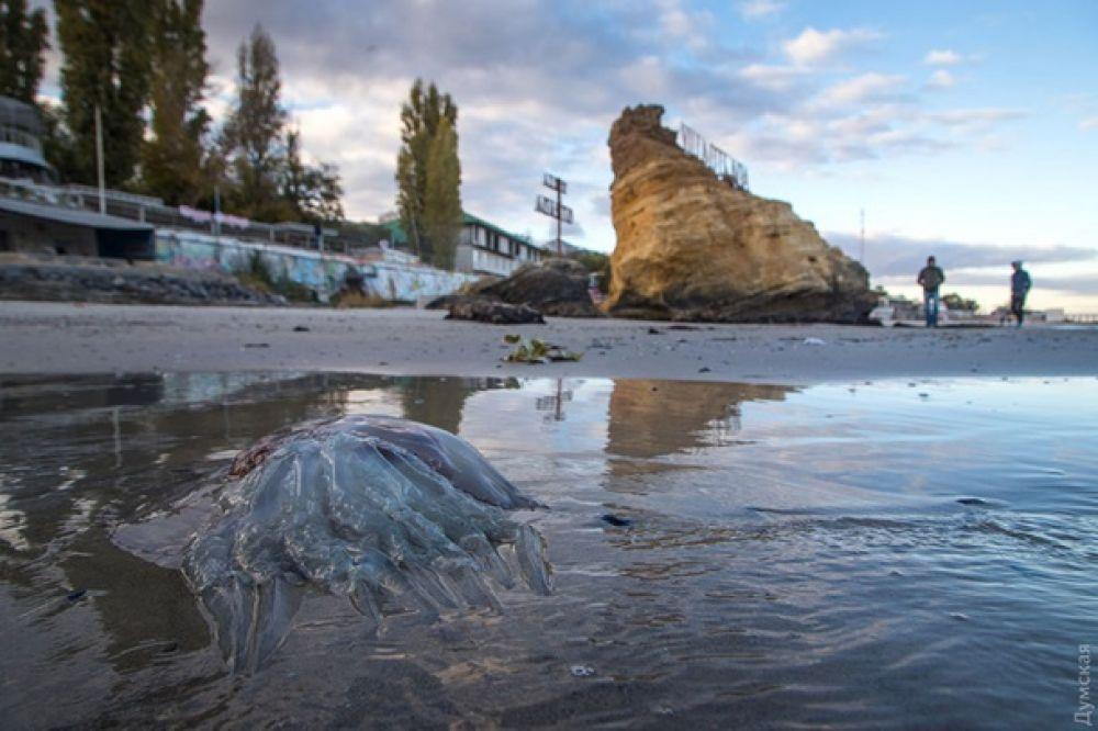 Волнолом и прочие объекты, которые раньше были под водой, теперь оказались на суше.