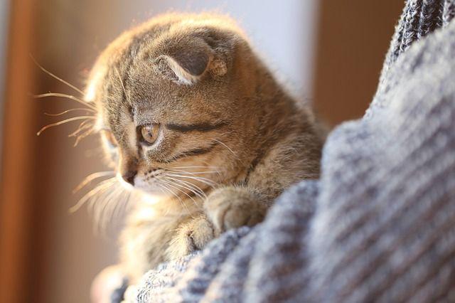 Калининградка выкрала у соседей кошку из-за «плохого обращения».