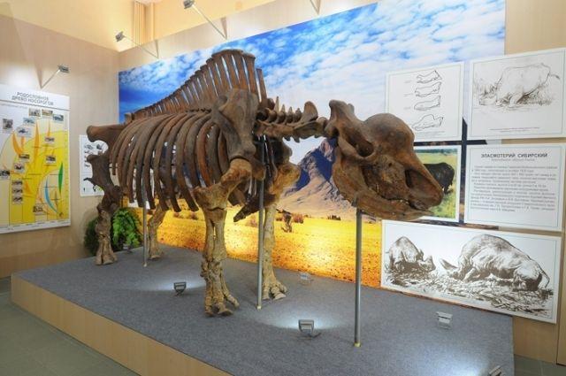 Предок носорога в сутки съедал 70 кг травы