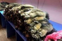 В офисе фирмы было обнаружено 339 шкур млекопитающего.