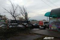 В Оренбурге сильный ветер свалил дерево на дорогу.