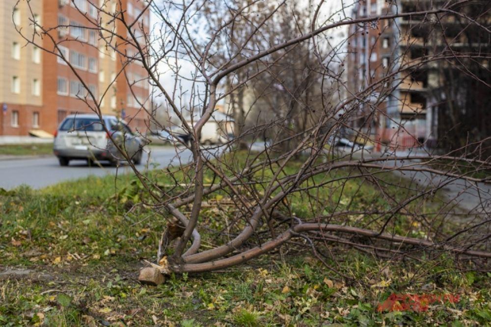 Они с самого утра присылали в редакцию фото поломанных деревьев.