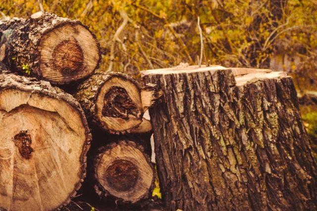 Дерево упало наподростка натерритории школы вКиселевске