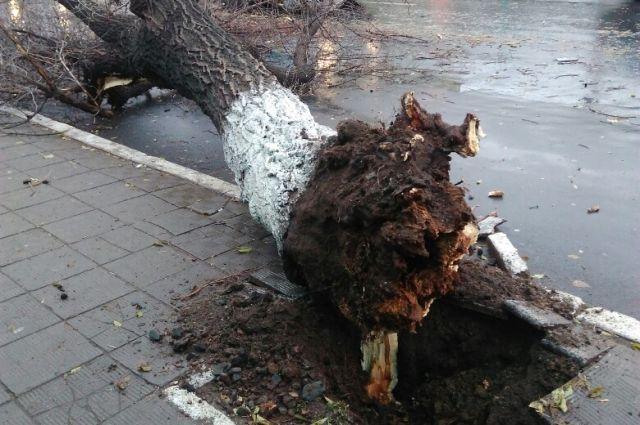 В Оренбурге ликвидируют последствия ночной непогоды.