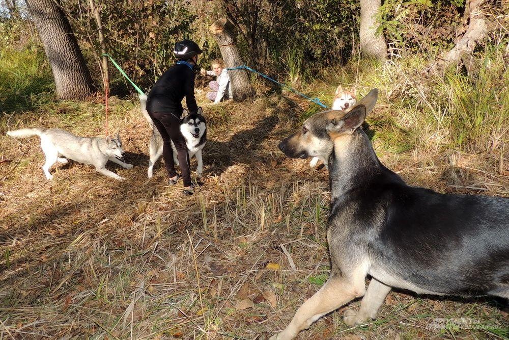 Эта бездомная собака пришла поболеть за своих породистых сородичей.