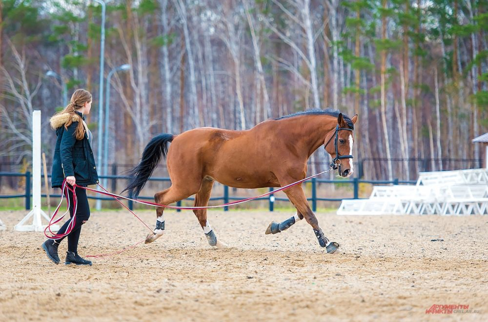 Перед соревнованиями лошадь обязательно должна размяться и прогреться