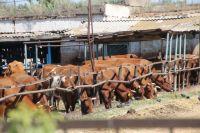Многие животные заражены лейкозом.