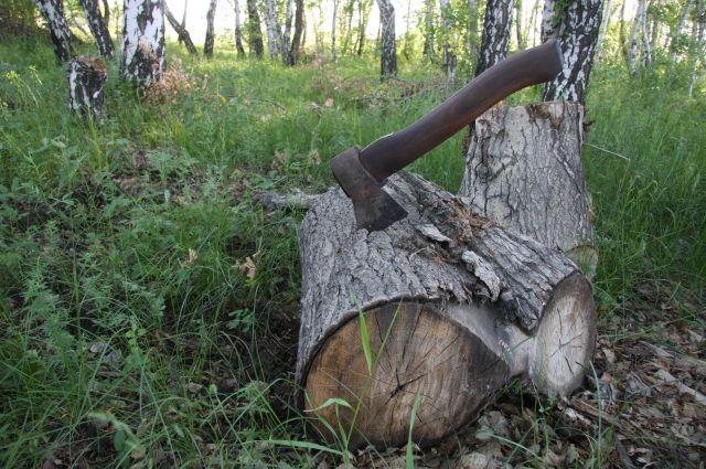 Провести инвентаризацию «зеленого запаса» в Челябинске ученые ЧелГУ предложили еще 4 года назад.