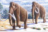 Мамонты - вымерший вид семейства слоновых.