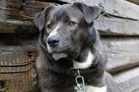 В Одесской области суд приговорил мужчину к трем годам лишения свободы с испытательным сроком один год за похищение собаки.