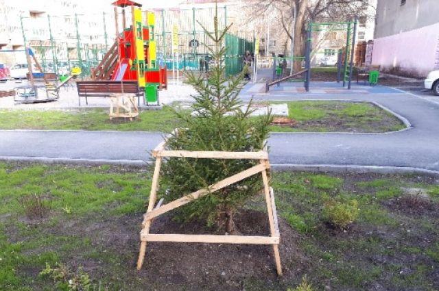 С начала 2018 года в Тюмени посадили 3 666 деревьев