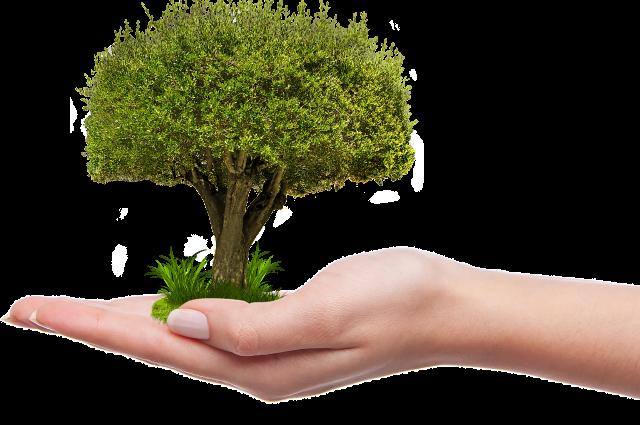 В Пуровском районе лучше всего экологии учат в Тарко-Сале и Ханымее
