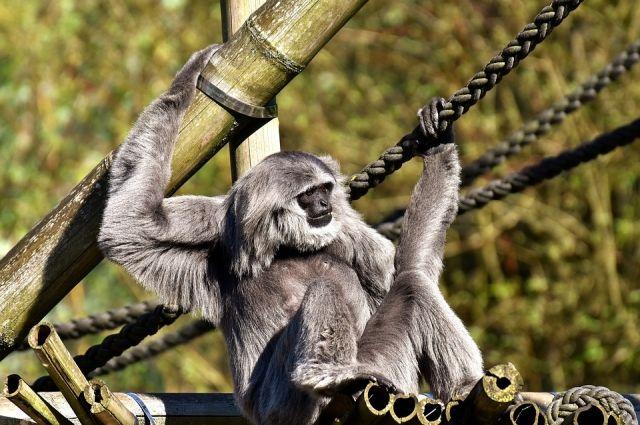 Для обезьян очень важно жить в окружении сородичей.