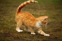 В Тюмени для съемок в фильме ищут беспородного игривого кота