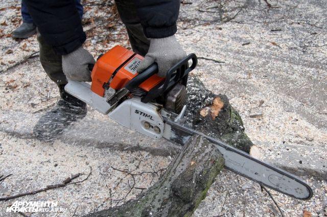 В лесу под Славском «черный» дровосек избил лесничего.