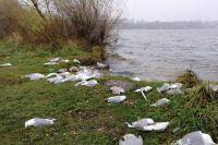 Массовая гибель чаек в Тернополе: названа вероятная причина смерти птиц