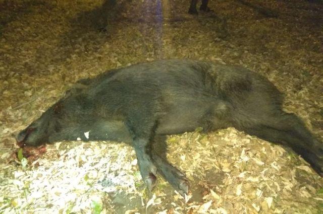 Винному в гибели дикого животного придётся выплатить государству ущерб.