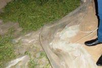 Обвиняемый выращивал наркосодержащие растения на участке земли своей матери.