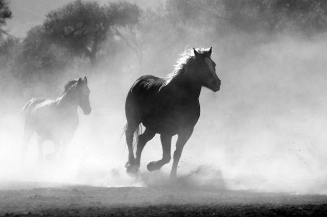 Под Тюменью в результате пожара в частной конюшне погибли десять лошадей