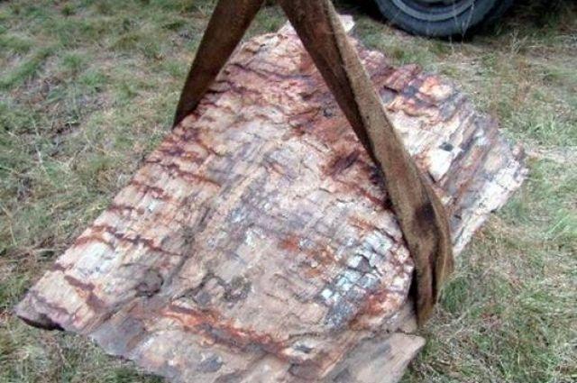 В Донецкой области хотели продать уникальный памятник природы