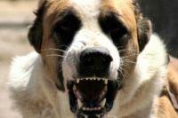 В Николаеве мужчина натравил на патрульных собаку: полиция применила оружие
