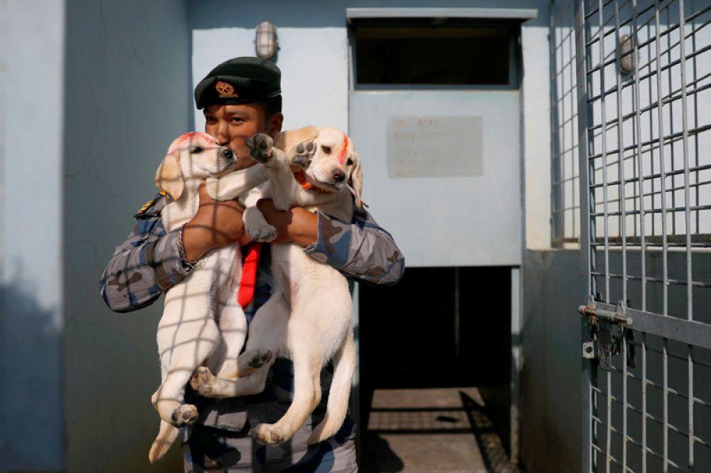 Полицейский с щенками в Катманду, Непал.