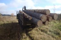Два жителя Тюменской области заплатят за три сосны более 300 тысяч рублей