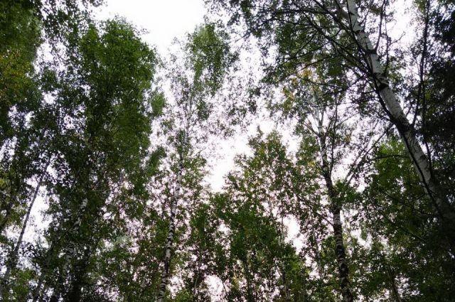 Мужчина решил отсидеться в лесу, чтобы не лишаться имущества.