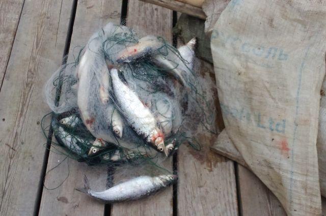 В этом году было поймано рекордное число браконьеров.