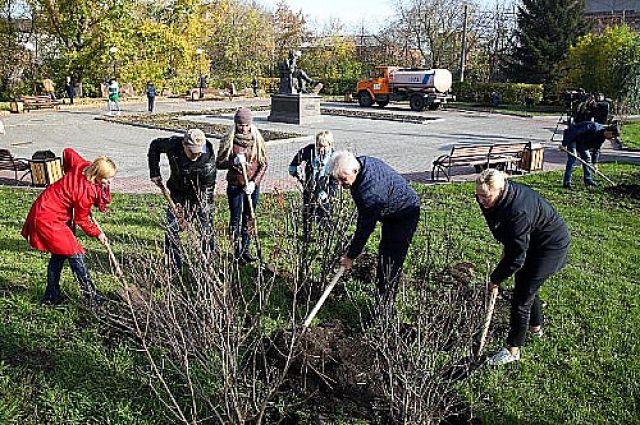 В Красноярске подвели итоги акции «Живи, лес».