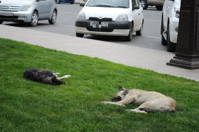 В 2018 году тюменский пункт содержания пристроил 834 бездомных животных