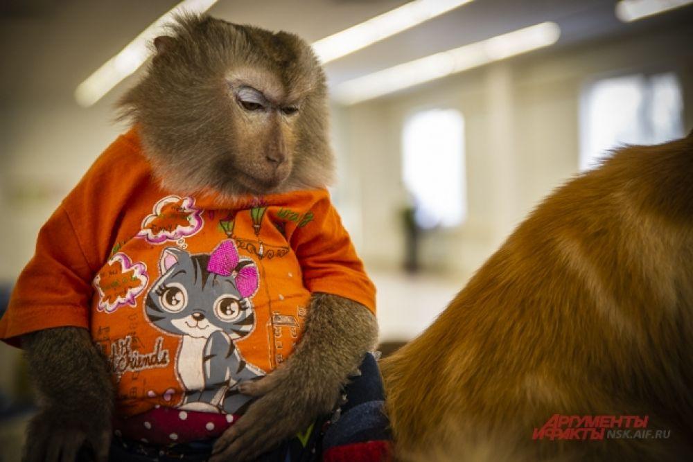 Но особенно умиляли гостей отношения между котом и обезьяной.