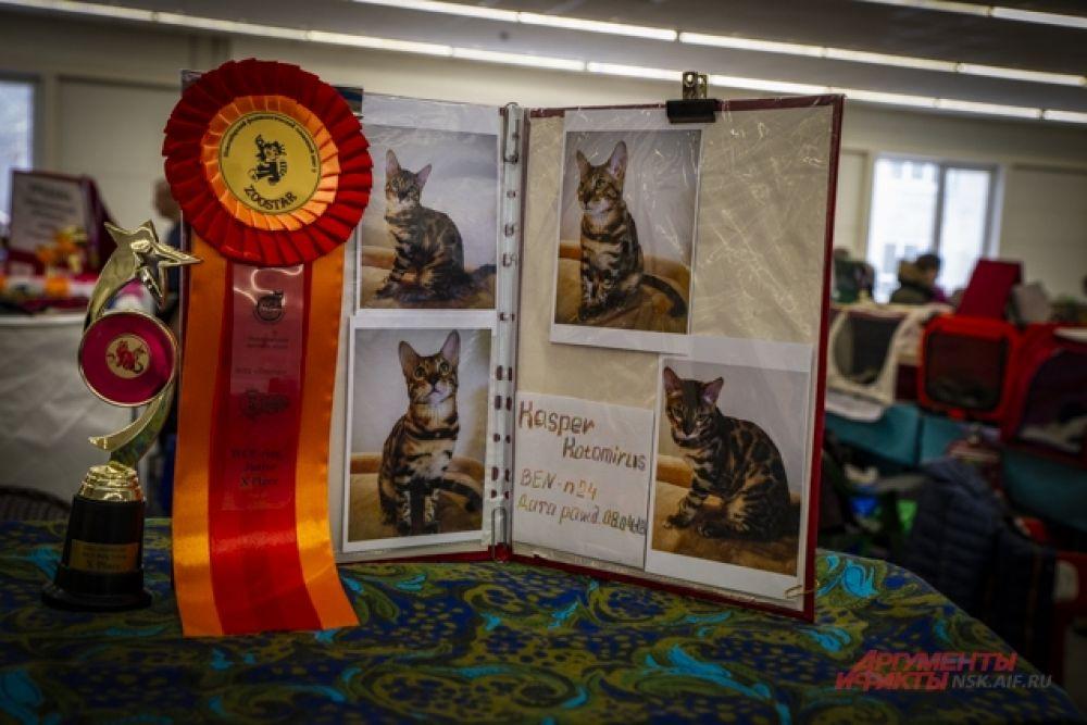 Некоторые кошки пришли на выставку с кубками и медалями.
