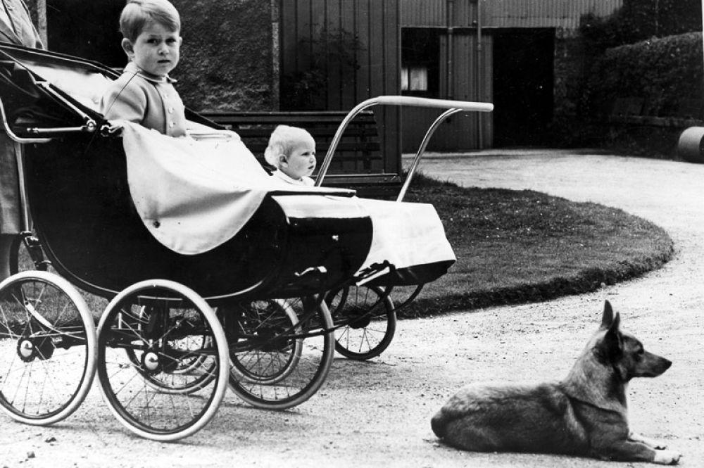 Принц Чарльз, принцесса Анна и один из королевских корги, 1951 год.