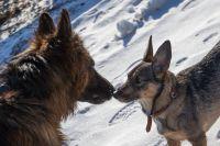 Что ждать людям от встречи с брошеной собакой?