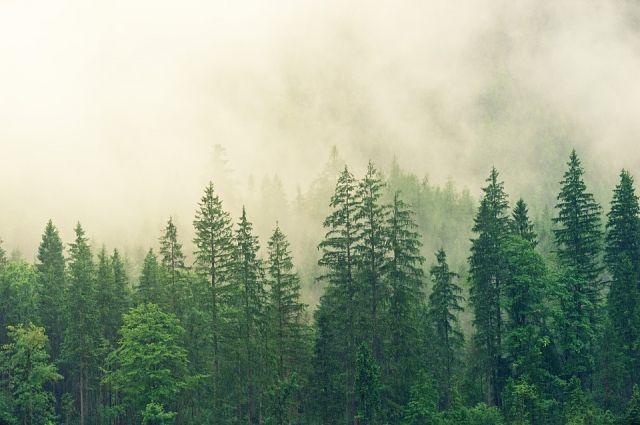 Поиски в лесу оказались безрезультатны.