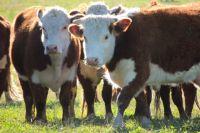 Ямальские фермеры получат для развития гранты-«агростартапы»